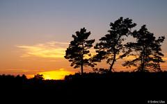 Sunset & Shadow (✦ Erdinc Ulas Photography ✦) Tags: sunset shadow netherlands nature holland dutch forest golden hour tree sun sky colourful landscape panasonic yellow gold blue clouds orange schaduw black focus travel outdoor