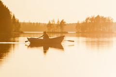 rowing on alke at sunset time 2 (VisitLakeland) Tags: finland lakeland summer auringonlasku backlight boat ilta järvi kesä lake luonto maisema nature outdoor outdoors rowing scenery soutaa sunset vastavalo vene water