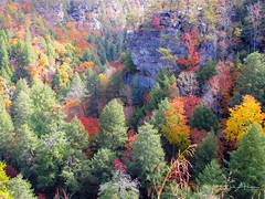 Fall Colors from Above (Catch the Moment Photography) Tags: landscapephotography fallcreekfallsstatepark landscapes scenic wadehooperphotography fallcolors forest fallleaves overlook trees tennessee leaves fallfoliage autumnleaves autumn cliffs