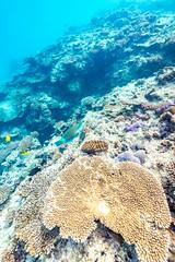 Underwater Heron Island-19 (Quick Shot Photos) Tags: australia canon canoncollective greatbarrierreef heronisland queensland underwater bogie au