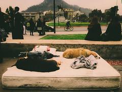 Comfortably numb (.KiLTRo.) Tags: providencia regiónmetropolitana chile cl kiltro animal dog gente urban city life street
