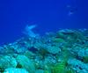 IMG_0087 (stevefenech) Tags: south pacific islands travel adventure stephen steve fenech fennock micronesia pohnpei kolonia under underwater diving scuba