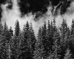 Treemendous! (John Westrock) Tags: trees blackandwhite monochrome fog landscape nature clouds washingtonstate pacificnorthwest snoqualmiepass canoneos5dmarkiii canonef100400mmf4556lisusm johnwestrock