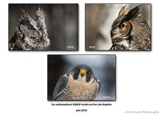 Oiseaux ambassadeurs / Ambassador Birds /UQROP