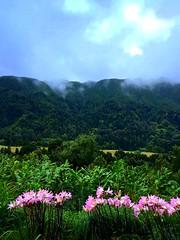 Madeira, Portugal (dimaruss34) Tags: newyork brooklyn dmitriyfomenko sky clouds trees madeira portugal svetlanafomenko forest fog flowers grass mountains lights
