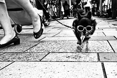 Streetwise...... (Victor Borst) Tags: street streetphotography streetlife reallife real realpeople asia asian asians faces face candid travel travelling trip traffic traveling urban urbanroots urbanjungle blackandwhite bw mono monotone monochrome tokyo harajuka dog dogs sunglasses city cityscape citylife
