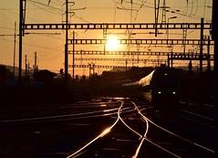 Morgenstund hat Gold im Mund (oder so) (Thomas Neuhaus) Tags: bern sbahn bahn s44 holligen bls nina rabe525 doppeltraktion morgen licht schatten morgenrot zug gleis weiche bahnhof fahrleitung abzweigung