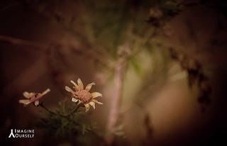 Imagine OurSelf©