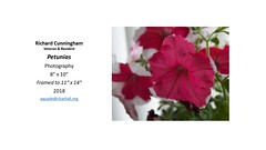 """Petunias • <a style=""""font-size:0.8em;"""" href=""""https://www.flickr.com/photos/124378531@N04/28624827767/"""" target=""""_blank"""">View on Flickr</a>"""