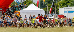 Driffield Show 2018 IMG_9783 (oddlegs) Tags: driffieldshow2018 driffield showground july rural agricultural traditional hounds foxhounds race