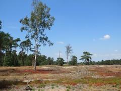 Nationaal Park de Hoge Veluwe (Elisa1880) Tags: nationaal park de hoge veluwe otterlo landschap landscape nederland netherlands gelderland