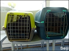 Waiting room (Seiji-Univers) Tags: seiji seijiunivers kajika psaro bunnies bunny lapins rabbit pet animal clinic vet veterinary véto vétérinaire france transport cage boys health santé vaccin vaccine
