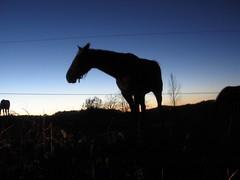 26/11/2010 sur la commune de Rouède (Dust.....) Tags: comminges kommingisthan komingisthan nature paysage lumiere nuage nuages photodepaysage landscape paisaje france animaux aminal animales chevaux cheval jument poulain horses horse mare caballos caballo yegua