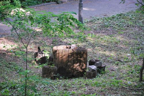 Аскольдова могила, Київ  InterNetri Ukraine 028