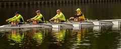 sunny morning Teeside rowers_ (grahamrobb888) Tags: nikon nikond800 nikkor d800 afnikkor80200mm128ed stocktonontees river rowers sport rowing water leisure england uk uksport watersports training competition