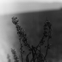 Z pamiętnika wiśniowego (1) (e.c.szczepanski) Tags: bnw photography artphotography wiśniowa nature naturephotography bnwfilm landscape bugs lighting crops film filmphotography ecs ecszczepanski 2018 flickr fomapan 400iso