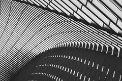 Liège-Guillemins railway station (hha_photo) Tags: liègeguillemins gare bahnhof structure railwaystation liège lüttich architecture architektur calatrava strukturen belgium blackandwhite monochrome black white schwarzundweiss steel stahl abstract