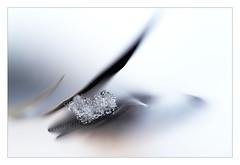 diamant-brut_4063 (jean louis billault) Tags: bleu blue macro white canoneos60d dof macromondays
