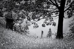 Losing Focus (drei88) Tags: reaching searching vision imagination selective focus framing light shadow atmosphere jewel energy vignette life death love memories fleeting past future lurking forlorn bleak dreary hope glimpse fear motion