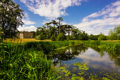 The River Tern (howard1916 - Something for everyone!) Tags: river water attinghampark nationaltrust shropshire tree grass sky