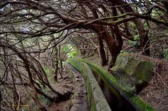Laberintoak (Erre Taele) Tags: levada agua arboles tree zuhautzak mendia mount monte nature naturaleza madeira portugal