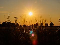 Es war wieder ein sonniger Sonntag - 2 (mohnblume2013) Tags: feld sonnenuntergang acker natur sonne abend gräser