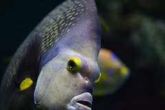 National Aquarium (michael_orr25) Tags: nikond7500 aquarium sealife