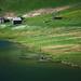 On the banks of Lago Cadagno | P2251732