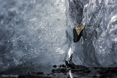 Caught (Shawn Herring) Tags: glacier valdez rock water ice frozen suspended hung caught light reflection marbled rocks lake alaska sony a7iii a7 iii shawn herring blue