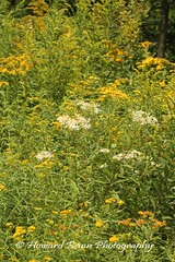 Endless Mountains (75) (Framemaker 2014) Tags: endless mountains sullivan county forkston pennsylvania northeast united states america flower
