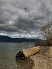 IMG_2690.jpg (Paul T. Marsh/PositivePaul) Tags: paulmarshphotography paultmarsh victoriabc vancouverisland lightroomcc iphone april2018 canada pacificnorthwest britishcolumbia wwwpaulmphotographycom 2018