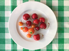 Cherry tomatoes this year are smaller than real cherries! (Micheo) Tags: strange funny comparison comparación manteldecuadros verano cosechapropia sonríe smile amatterofsize cocina kitchen dish plato cherrytomatoes spain cherries tomatoes
