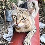 Trípode o John Silver (aun dudo con el nombre). Elegancia a tres patas #gatos #gatoscallejeros #cats #photocats #instacats #neko #meow #gatze #gatto #koshka #catsofworld #catsofinstagram #streetcats #chat #eyes #ojos #eyelicious thumbnail