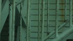 DSC06991 (A Common Courtesy) Tags: a common courtesy wellington auckland new zealand camera photo bw color black white day night monochrome bokeh sony nex 5a nex5a focuspeaking minolta mc pg 50mm 14rokkor fotodiox adapter