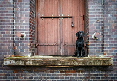 As long as it takes (Walerija Weiser) Tags: hund tür ziegel berlin fabrik lager schloss warten loyalität