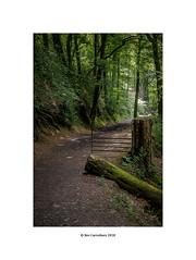 the fallen.... (bevscwelsh) Tags: woodland path loggerheads fuji1855 fujixt2