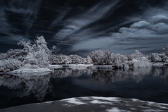 Cloud And Tree Reflections At Santee Lakes - Infrared (Bill Gracey 20 Million Views) Tags: infrared infraredphotography ir convertedinfraredcamera santeelakes clouds channelswapping trees reflections