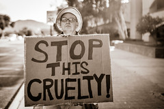 Stop this Cruelty (Johnny Silvercloud) Tags: freethechildren antitrump arizona civil civilrights immigrantpolicy justice latinamerican mexican people protest rally rights socialjustice sociopolitical solidarity trumpera tucson unitedstates children civic latin protestmarch protesters signs streetphotography