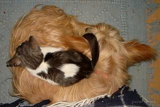 Hund und Katz - auf ihrem Platz * Dog and cat - on their place * Perro y gato - en su lugar *  .  DSC09456-001
