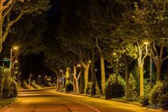 Va per la tua strada (boscoloaaron1) Tags: italia italy emiliaromagna romagna terradelsole citta city strada street foto fotografia photography alberi trees luci lights notte night nikon nikond5300 d5300 tamron18200 tamron