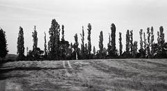 treeline (OhDark30) Tags: carl zeiss jena czj werra 3 tessar 2850 35mm film monochrome bw blackandwhite bwfp fomapan 200 rodinal poplar trees hedge field skyline grass summer morning panorama pano crop