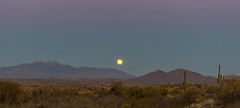 Four Peaks Moonrise (blue5011b) Tags: fourpeaks mountains full moon bluehour cactus desert southwest landscape panoramic nikon d810 2470mm arizona