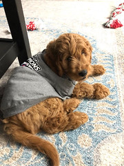 Ginger's handsome boy Finn is ready for the game!