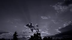 IMG_6293 (ALEKSANDR RYBAK) Tags: закат вечер солнечные лучи небо облака деревья пейзаж sunset evening solar beams sky clouds trees landscape