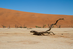IMG_8566 (Tatjana_Schmid) Tags: namibia sossusvlei deadvlei wüste desert sand sanddunes dünen africa afrika landschaft landscape reise holiday urlaub travel