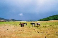 . (Careless Edition) Tags: photography film mongolia nature landscape eight lakes horse trek rain storm