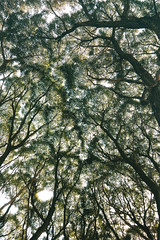 (decemberGirl.) Tags: trees branches green nature summer