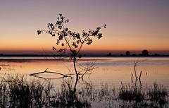 la hora dorada (pascual 53) Tags: xabi eos1dmarkiii 50mm laguna canon