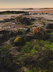 Remnant (mattwalkerncl) Tags: 5dmkiv beach benro canon content eos embleton england general landscape leefilters northeastcoastline northumberland otherkeywords places sand sea seascape summer sunrise uk visitengland dunstanburgh