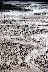 Oyster farm (MelindaChan ^..^) Tags: guangxi china 廣西 oyster farm lowtide chanmelmel mel melinda melindachan beach pattern plantation